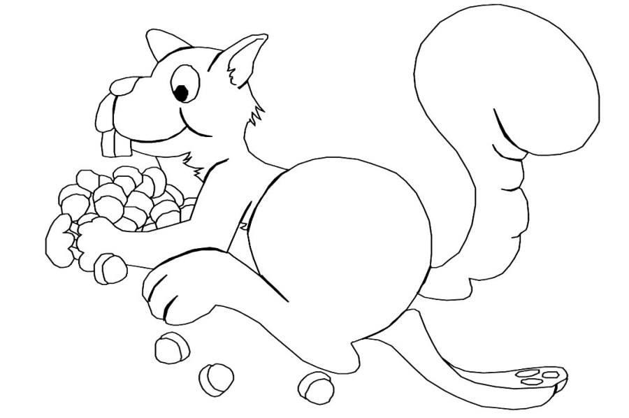 coloriages ecureuil