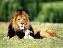 coloriages lion