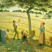 Pissaro - Pommes Eragny