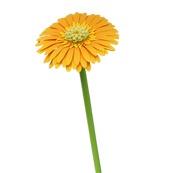 Fleurs en papier - Gerbera