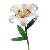 Fleurs en papier - Lys